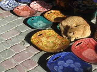 gattino-marocchino